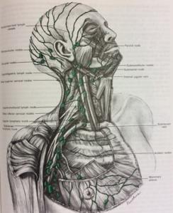 vasoslinfaticos-cuellos